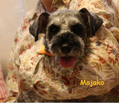 Mojako_2