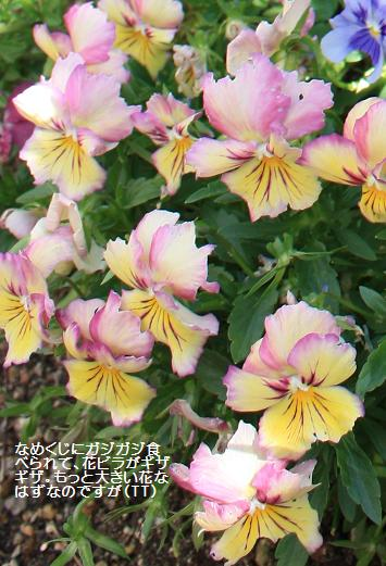 Garden2009may2